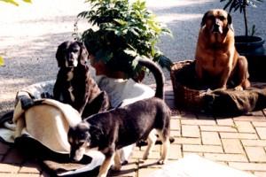 Don Giovanny, Sorbas & Billy