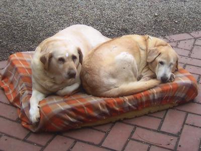 Sunny & Sandy