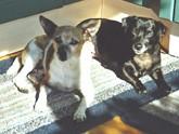Maxi und Elfie