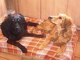 Oskar und Vroni