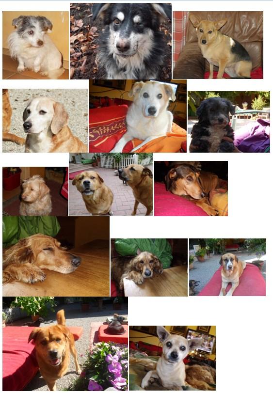 Hunde_22