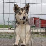 Vorlage Hunde Vermittlung HP