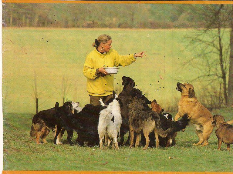 Foto für Homepage Hunde