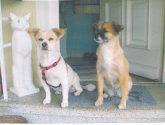 Boubou und Susi