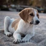 hund1_604891_thumb