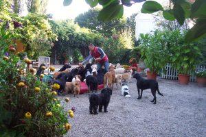 Engagierte/r, äußerst tierliebe/r Hundepfleger/in gesucht!